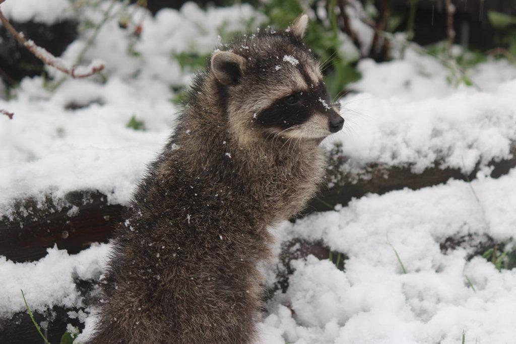 Festival to help furry friends - Aldergrove Star