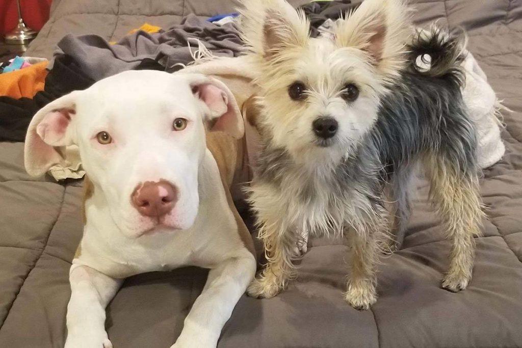 Chilliwack family's dog missing after using online pet-sitting service - Aldergrove Star